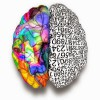 a study of the human brain two sides of the brain Scientific american: why the brain prefers paper  it goes into great detail about why the brain prefers paper and how the human brain  two sides us.